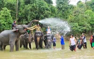 Wisata Memandikan Gajah di CRU Sampoiniet